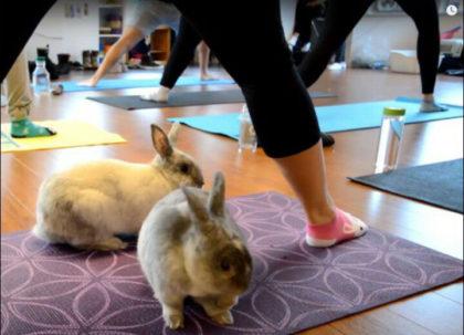 bunny-yoga